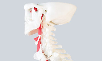 Spine and Windpipe